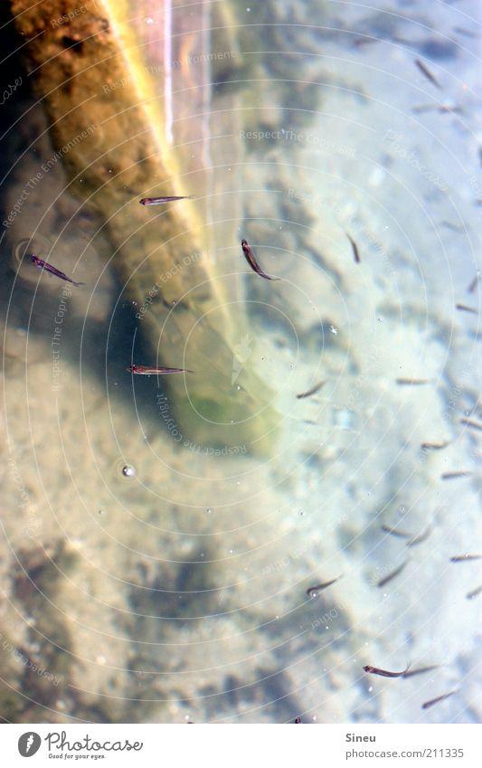 Freischwimmer Erde Sand Wasser Moos Fisch Tiergruppe Leiter Leitersprosse kalt klein Zusammensein Bewegung stagnierend Ferne Rost Farbfoto Außenaufnahme