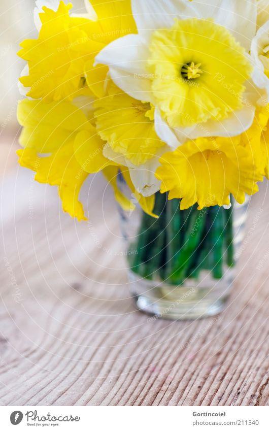 Narcissus Blume Blüte schön Gelbe Narzisse Frühling Frühlingsblume Blumenstrauß Vase Holztisch Blütenpflanze gelb Dekoration & Verzierung Farbfoto Innenaufnahme
