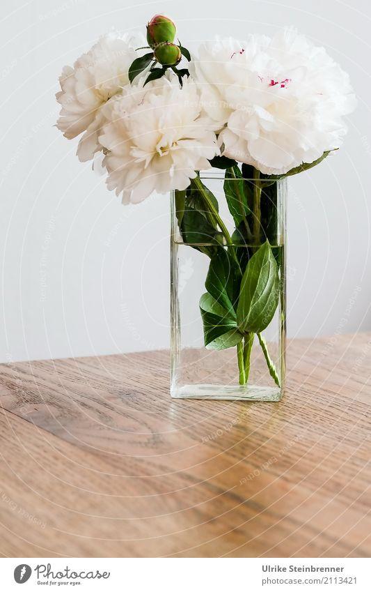 Pfingstrosen Wohnung Tisch Wohnzimmer Pflanze Blume Blatt Blüte Blumenstrauß Vase Glas Duft leuchten stehen ästhetisch frisch natürlich schön weich grün weiß