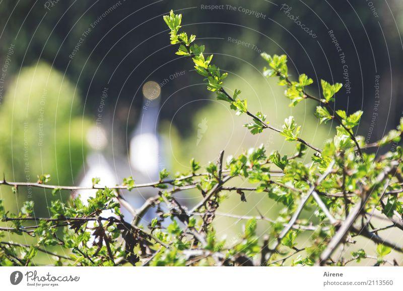 mit religiösem Hintergrund Natur Pflanze Sommer grün Landschaft Ferne Wald Religion & Glaube Kirche Idylle Sträucher Schönes Wetter Hoffnung Dorf Tradition