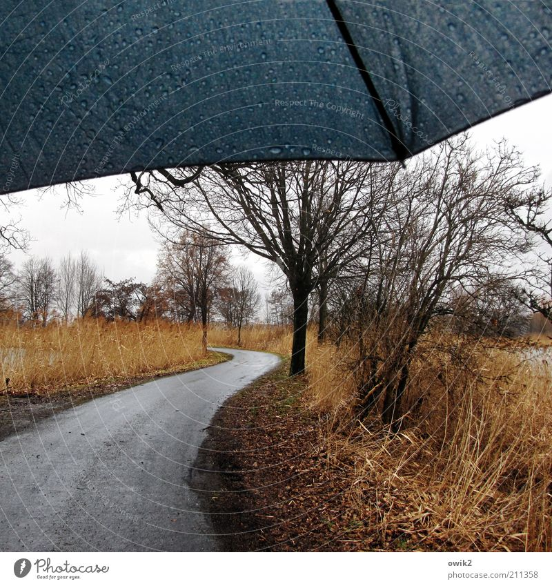 Wind und Wetter Umwelt Natur Landschaft Wasser Wassertropfen Himmel Horizont Winter Klima schlechtes Wetter Regen Pflanze Baum Gras Sträucher Wildpflanze