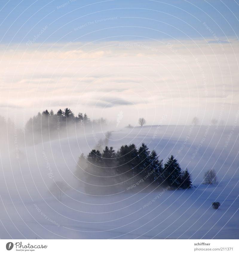 Märchenland I Natur Landschaft Himmel Wolken Winter Wetter Nebel Eis Frost Schnee Baum Wald Berge u. Gebirge Schneebedeckte Gipfel kalt Zufriedenheit