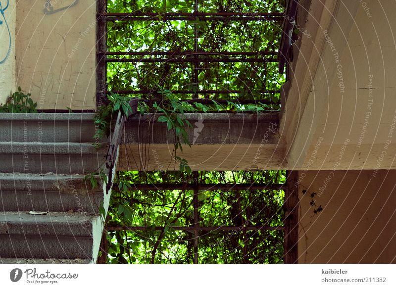 green building Pflanze Efeu Wildpflanze Industrieanlage Ruine Gebäude Treppe Fenster Wachstum alt dreckig dunkel kaputt grün Symmetrie Verfall Vergangenheit