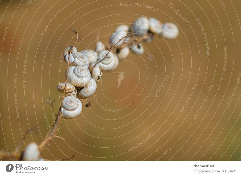 Escargot Natur Pflanze weiß Tier Umwelt Wege & Pfade braun Zusammensein Tiergruppe Geschwindigkeit planen Zweig Mobilität Autobahn bizarr Schnecke