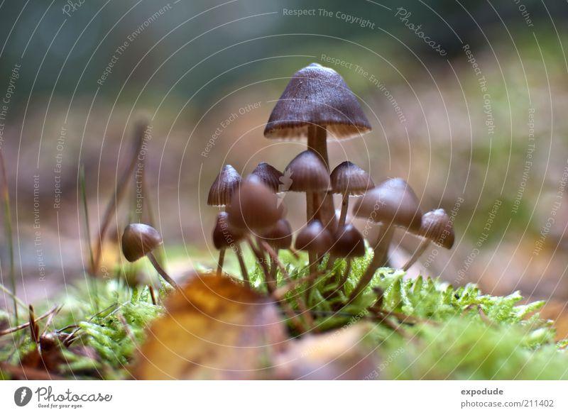 Pilzversammlung Natur grün Pflanze Sommer braun Umwelt Pilzhut