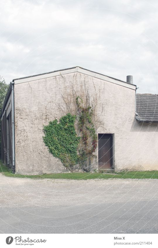 tristesse Pflanze Haus Wand Mauer Gebäude Tür Wachstum einfach Bauernhof Scheune Hof Efeu Putzfassade Giebelseite Fassadenbegrünung