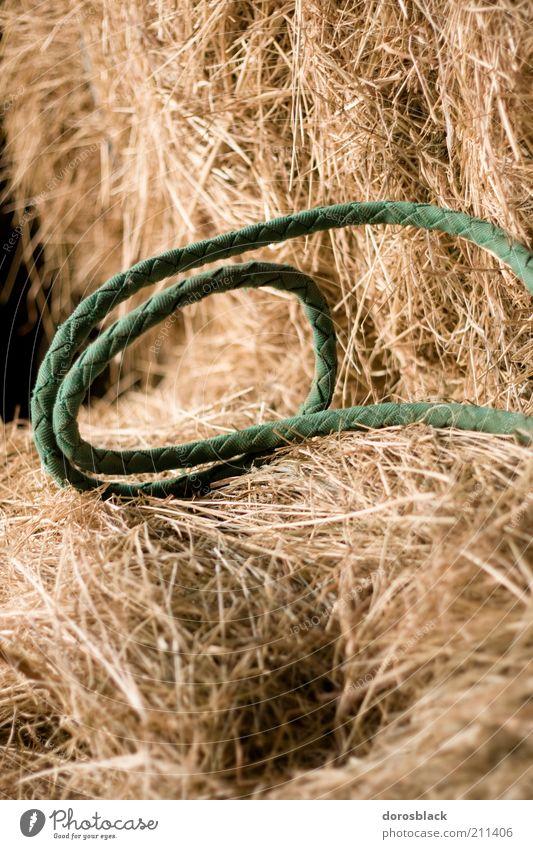 strohbett grün gelb Seil Stroh Heu Schlaufe
