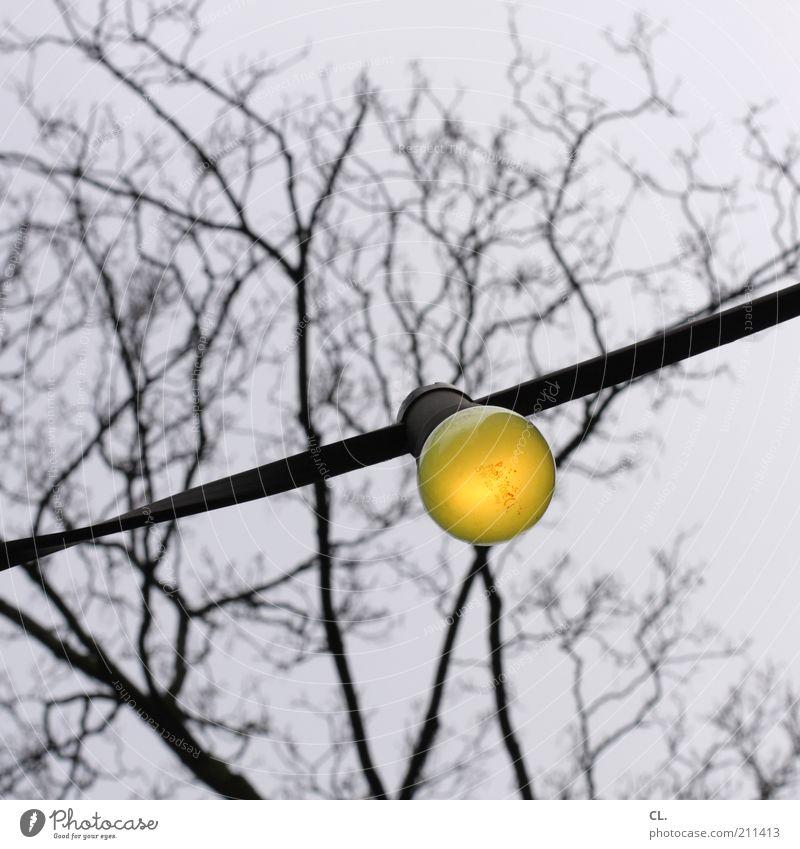gelb Umwelt Natur Himmel Herbst schlechtes Wetter Baum Glühbirne alt kalt Energie Idee stagnierend Elektrizität leuchten Beleuchtung laublos kahl einzeln 1