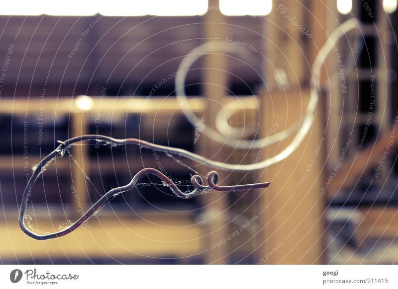 so wachsen Korkenzieher alt Draht Biegung stachelig gekrümmt verdreht schlangenförmig gedreht verdrahtet Spinngewebe drahtig