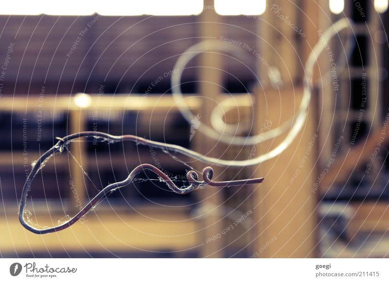 so wachsen Korkenzieher alt stachelig verdreht Draht Spinngewebe schlangenförmig drahtig gedreht gezwirbelt gekrümmt Biegung Farbfoto Nahaufnahme Menschenleer