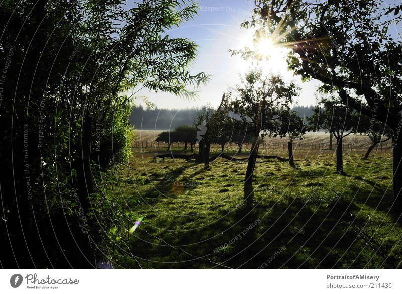 UnderWhiteChurch Trees Natur Baum Sonne ruhig Wärme Landschaft Feld Idylle Schönes Wetter Plantage