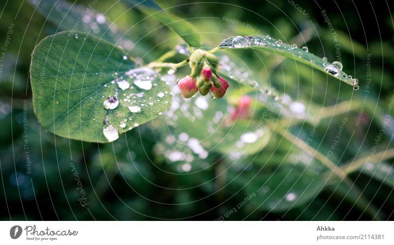 Schweißtropfen? Gesundheit Zufriedenheit Natur Pflanze Urelemente Wassertropfen Sommer Blatt Blüte Tropfen glänzend dunkel Flüssigkeit frisch nass grün rot
