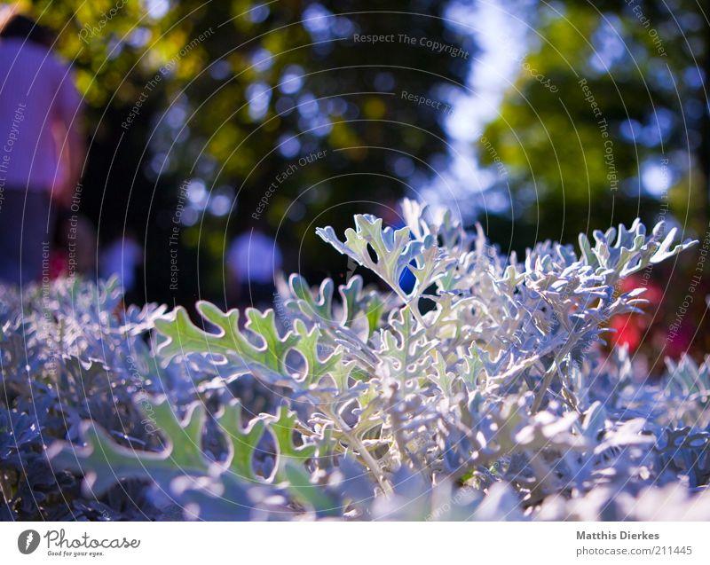 Botanischer Garten Natur weiß Blume Pflanze Sommer Blatt Wiese Blüte Gras Garten grau Park rosa Umwelt frisch ästhetisch