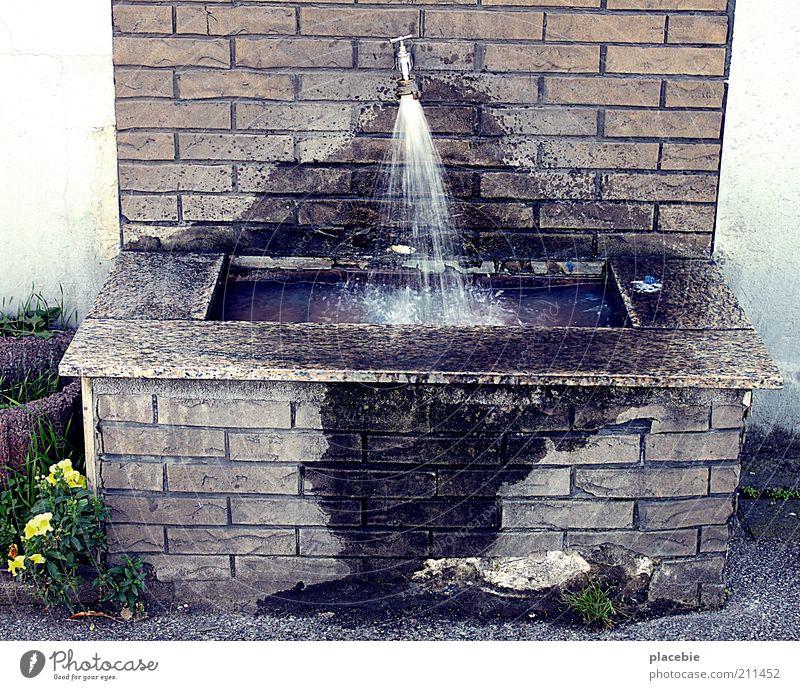 Öffentliches Waschbecken Natur alt Pflanze Wasser Blume Erholung gelb Wand Mauer grau Stein braun nass Beton kaputt Reinigen