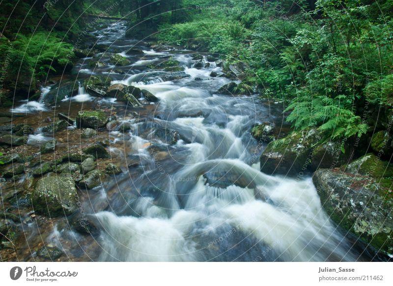 Bachlauf Natur Wasser schön grün Pflanze Wald Stein Landschaft Umwelt Felsen Erde ästhetisch Fluss weich Urelemente