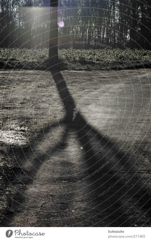 Baumschatten auf Asphalt Natur Winter ruhig Einsamkeit Wald kalt Herbst Tod grau Traurigkeit Wege & Pfade Landschaft Feld Umwelt Ende