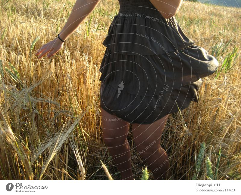 Tanz im Kornfeld Mensch Natur Freude Pflanze Sommer gelb feminin Bewegung Wärme Beine braun Haut Arme frei Fröhlichkeit Kleid