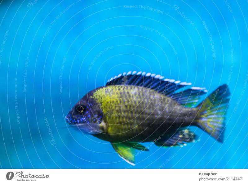 Fisch ein Portrait von der Seite Natur blau schön Wasser Erholung Tier Umwelt kalt gelb Schwimmen & Baden Zufriedenheit ästhetisch authentisch nass Coolness