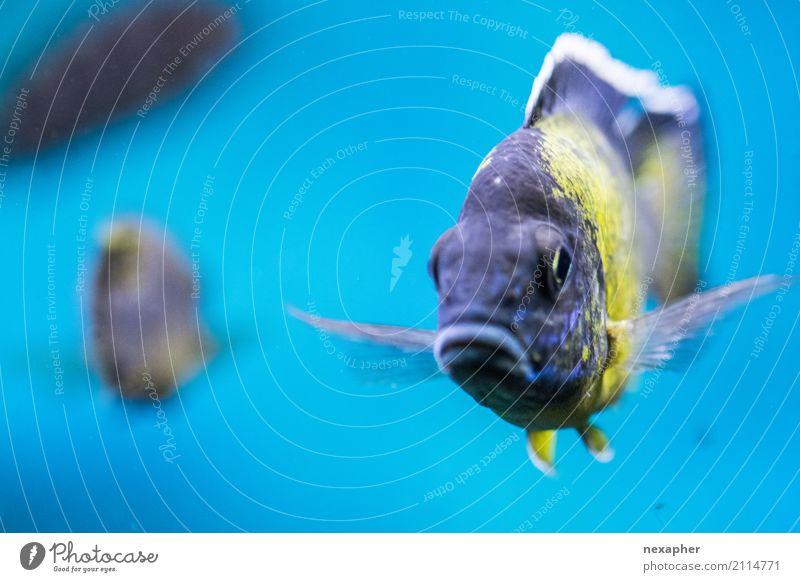 Bin ich Dori - der vergessliche Fisch aus findet Nemo Tier Aquarium 1 2 atmen Erholung Schwimmen & Baden tauchen ästhetisch Coolness authentisch einfach