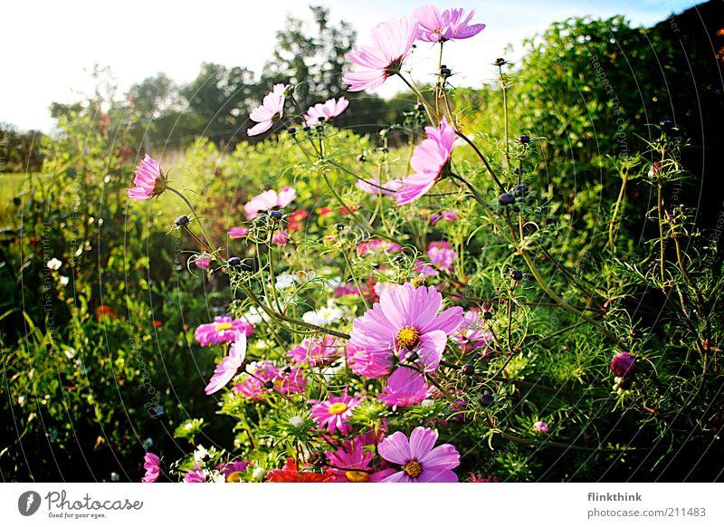 Sommer Blumen Natur grün Pflanze Erholung Wiese Blüte Gras Frühling Garten Landschaft Umwelt Sträucher violett Blühend