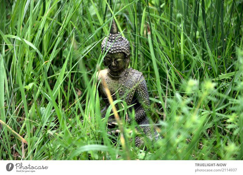 Kleiner Buddha halb versteckt im grünen Gras sitzend Natur Sommer Erholung ruhig Gesundheit Frühling Liebe Wiese Glück grau Zufriedenheit gold Wellness