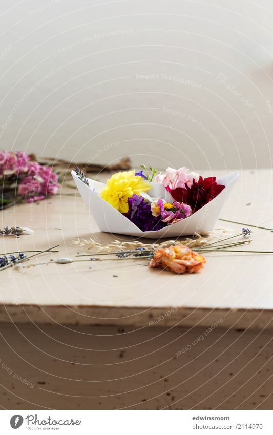 Flower boat Freizeit & Hobby Basteln Sommer Dekoration & Verzierung Tisch Pflanze Blüte Dahlien Lavendel Papier Papierschiff Holz Blühend Duft frisch schön