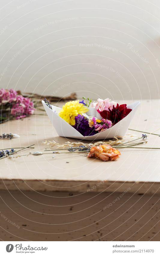 Flower boat Natur Pflanze Sommer schön gelb Blüte natürlich feminin Holz rosa wild Freizeit & Hobby Dekoration & Verzierung elegant frisch Fröhlichkeit
