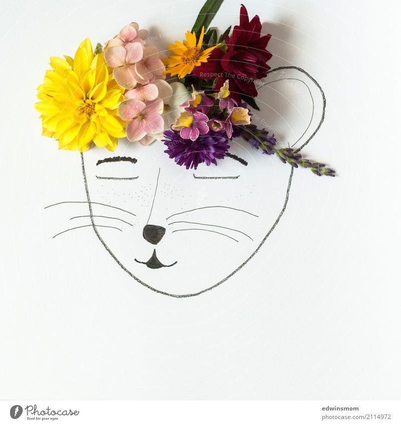 Flower power Pflanze Sommer schön weiß Blume gelb Blüte feminin rosa hell wild Freizeit & Hobby Zufriedenheit Dekoration & Verzierung Kreativität Fröhlichkeit