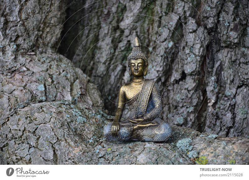 Kleiner Buddha auf Wurzel eines mächtigen Eichenbaums sitzend blau schön Baum Erholung ruhig Wald dunkel Gesundheit Holz Glück Stein grau Zufriedenheit