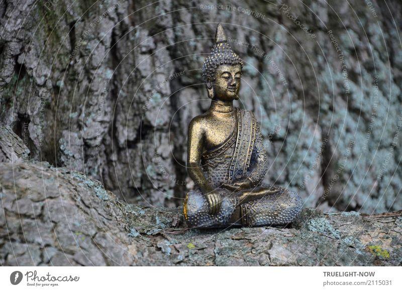 zeitlos   ... sitzt immer noch Natur blau schön Baum Erholung ruhig Lifestyle Glück Kunst grau Zufriedenheit gold glänzend Kraft Kultur Wellness