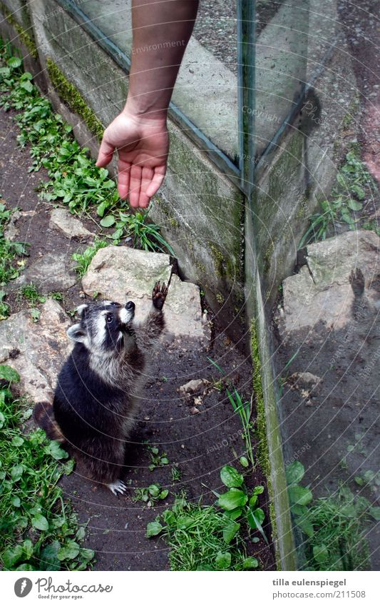 ich bin ein star, holt mich hier raus! Hand Ferien & Urlaub & Reisen Tier Zusammensein warten Arme Hilfsbereitschaft Hoffnung Tourismus beobachten Zoo Neugier Konzentration Wildtier niedlich
