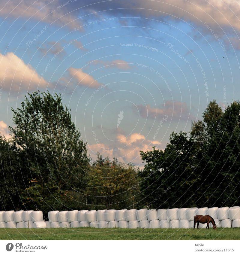 Vorratshaltung Umwelt Natur Landschaft Pflanze Tier Luft Himmel Wolken Sommer Klima Wetter Wiese Weide Nutztier Pferd 1 Fressen stehen dunkel blau braun grau