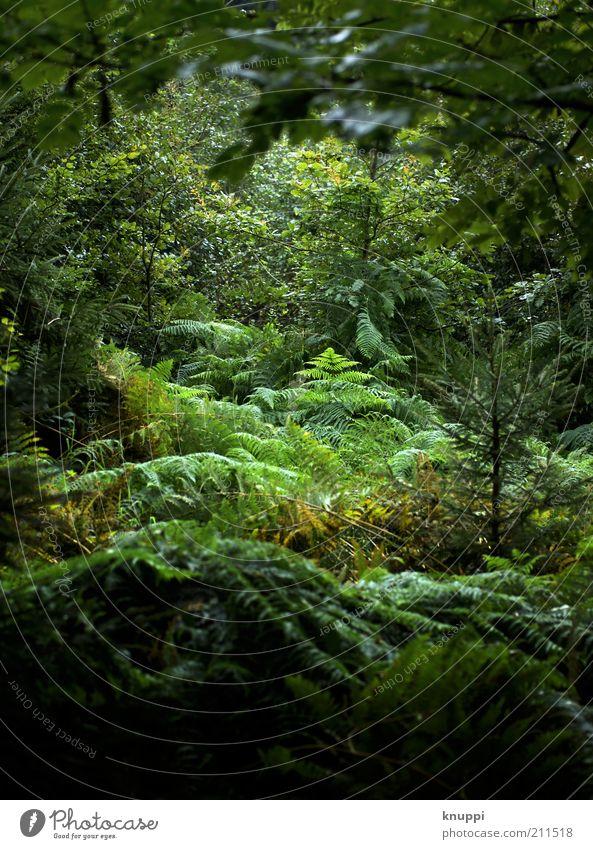 welcome to the jungle Natur grün Baum Pflanze Sommer Ferien & Urlaub & Reisen Blatt ruhig Wald Erholung Umwelt Regen nass Ausflug Wachstum Sträucher
