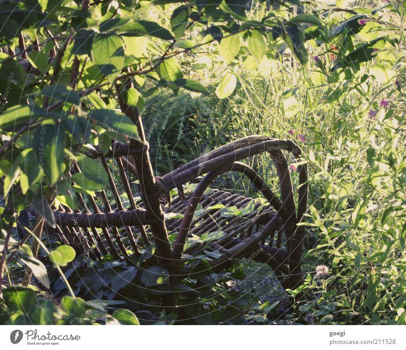 Leerstuhl Stuhl Gartenstuhl Schaukelstuhl Natur Pflanze Sommer Schönes Wetter Blume Gras Sträucher Blüte Grünpflanze Holz alt genießen schaukeln träumen dreckig