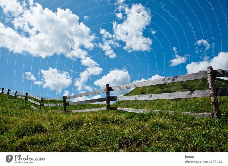 Raumtrenner Natur Landschaft Pflanze Wolken Sommer Schönes Wetter Gras Wiese Hügel Blühend Duft blau grün ruhig Erholung Idylle Zaun Zaunpfahl Weide Bretterzaun