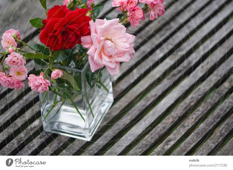 rosarot schön Pflanze Sommer Blume Gefühle Holz Blüte Glück Glas ästhetisch mehrere Rose Romantik Dekoration & Verzierung