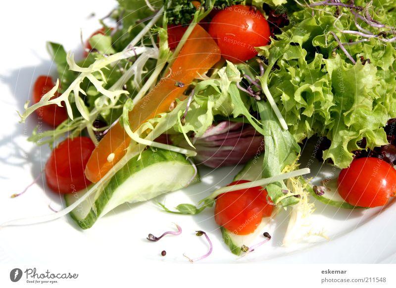 Salat Lebensmittel Gemüse Ernährung Teller Gesundheit frisch weiß Tomate Chicorée angerichtet serviert Gurke Petersilie Vorspeise Rohkost Vitamin vitaminreich