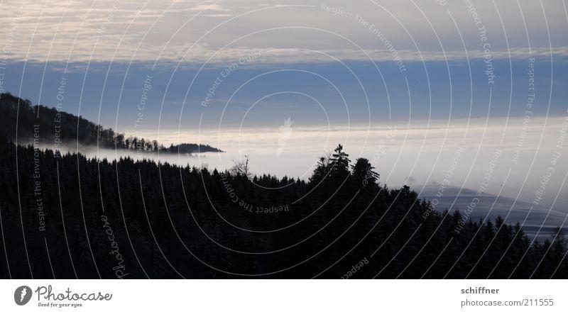 Märchenland II Himmel Baum Pflanze Winter schwarz Ferne Wald dunkel kalt Landschaft Nebel Aussicht Klima geheimnisvoll Tanne mystisch
