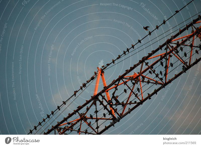 Die Vögel Baustelle Baumaschine Kran Vogel Schwarm schlafen Zusammensein Vogelschwarm Farbfoto Gedeckte Farben Außenaufnahme Abend Froschperspektive