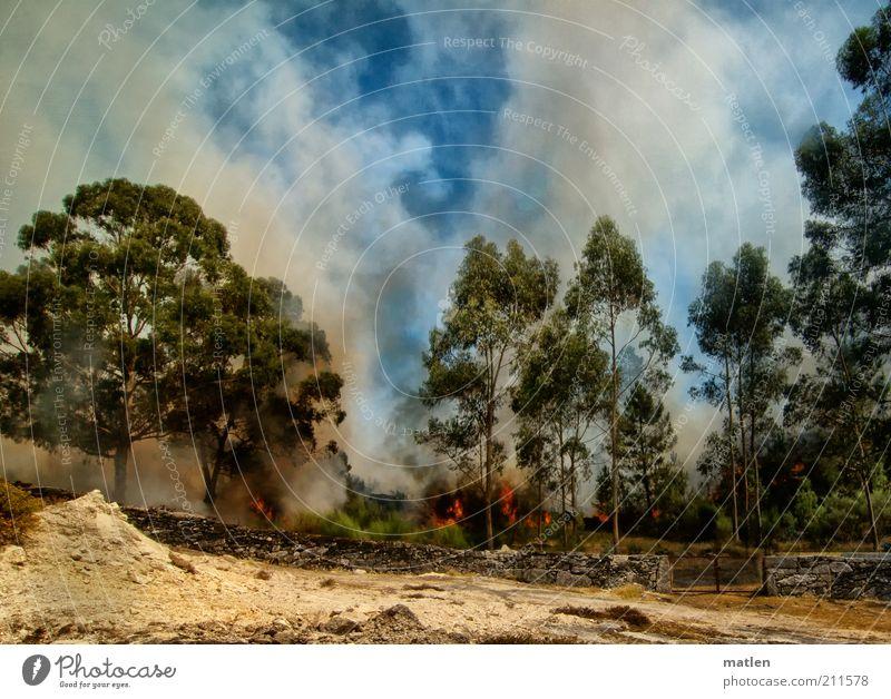Feuerzeug Natur Landschaft Erde Sand Luft Himmel Wolken Sommer Schönes Wetter Baum Wald Menschenleer Mauer Wand mehrfarbig brennen Rauchen Eukalyptusbaum