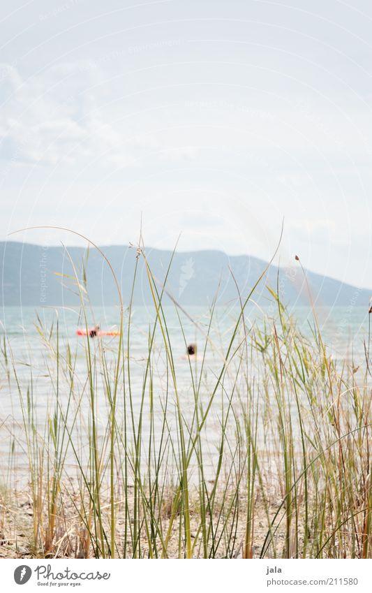 relax Natur Wasser Himmel Schönes Wetter Pflanze Gras Seeufer hell Farbfoto Außenaufnahme Textfreiraum oben Tag Erholungsgebiet Menschenleer ruhig