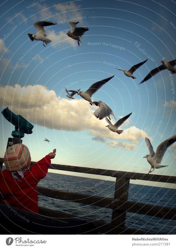 Freizeit ist Fütterungszeit (aka Der Fütterer) Mensch Kind blau Wasser Ferien & Urlaub & Reisen weiß Meer Tier Wolken Herbst Küste klein Vogel Kindheit fliegen