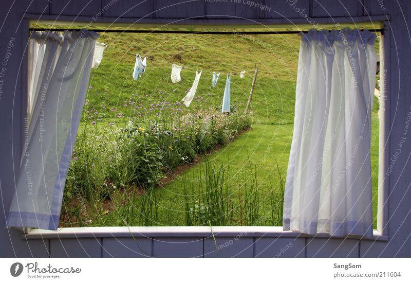 Sommerfenster Garten Raum Natur Pflanze Blume Gras Grünpflanze Wiese Hütte Fenster Holz Blühend Erholung Frühlingsgefühle Einsamkeit Unterwäsche Vorhang