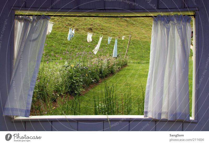 Sommerfenster Natur grün weiß Pflanze Erholung Einsamkeit Blume Fenster Wiese Gras Holz Garten träumen Raum Wind