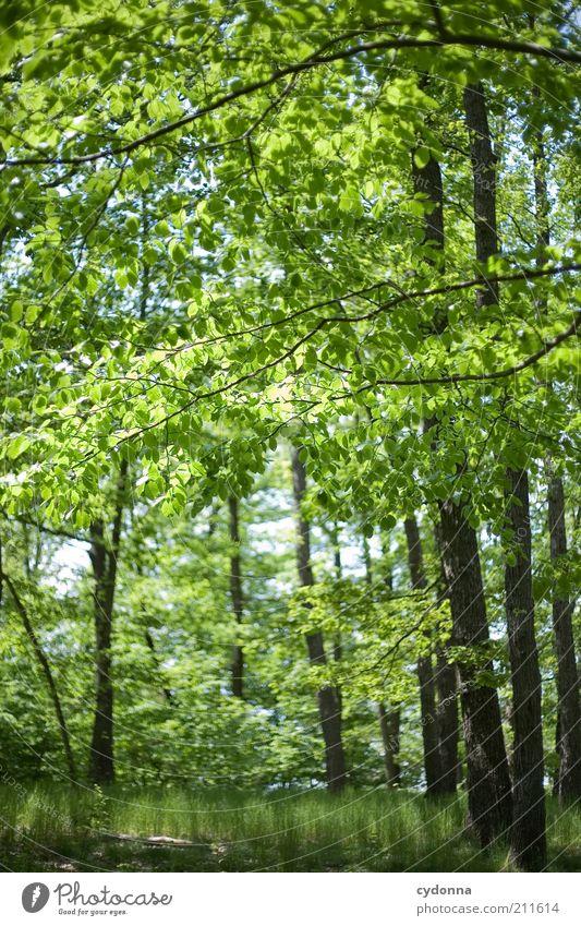 Es grünt so grün harmonisch Wohlgefühl Erholung ruhig Umwelt Natur Landschaft Frühling Sommer Baum Blatt Wald einzigartig Freiheit geheimnisvoll Idylle Leben