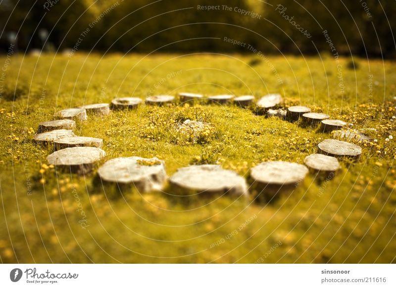 Wer hat Stonehenge abgeschnitten? Natur Baum grün gelb Gras Holz Landschaft Kreis rund Idylle Unschärfe Abholzung Baumstumpf