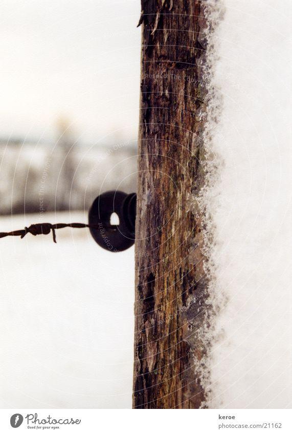 verschneiter Zaunpfosten Schnee Holz Stacheldraht Viehweidezaun