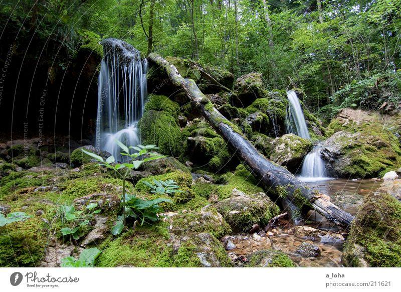 nature 5.5 ruhig Berge u. Gebirge Urelemente Wasser Wassertropfen Sommer Pflanze Baum Moos Wald Felsen Alpen Bach Wasserfall träumen Wachstum authentisch