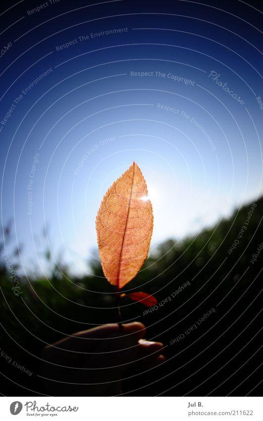 the red coloured Sonnenlicht Schönes Wetter Blatt Freude Begeisterung schön Hand Finger stoppen Reflexion & Spiegelung durchscheinend Himmel Natur Farbfoto