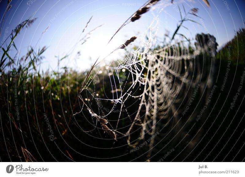 Feldnetz Natur Sonnenlicht Schönes Wetter Spinne Gefühle schön ruhig Spinnennetz Reflexion & Spiegelung Gras Blauer Himmel Menschenleer Farbfoto Außenaufnahme
